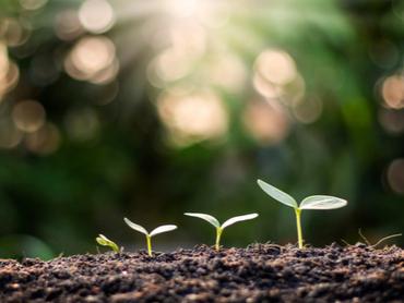 Crece la producción ecológica