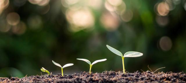 Crece la ecología